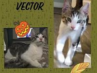 My story Vector is an adorable busy kitten. He's a