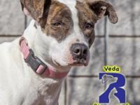 Veda is a precious and shy girl with eyes that will
