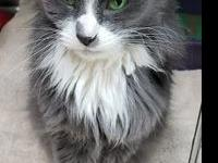 Veegee's story I'm a beautiful gray and white,