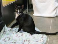 Vega, 6 month old male. Vega and brother, Monte Carlo,