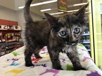 Velma's story So loving and playful! Indoor Only.
