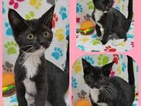 Velma's story Our adoption fee is 80.00 which covers