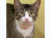 Venice's story Venice is a very sweet gal looking for a