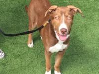 Venus is a 5-6 month old border collie mix that is