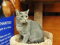 Venus's story Venus is a gorgeous adult female cat with