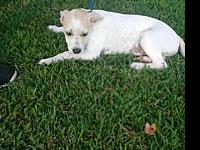 Venus's story I am one of seven pups. Our mom is a