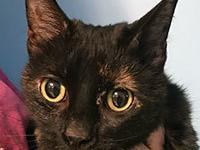 Venus is a 4 year old domestic short hair. She has been