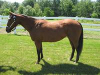 Shiloh's Doc is a 1999 bay American Quarter Horse mare.