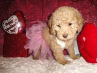 I have 8 toy poodle puppies. They are all very cute and