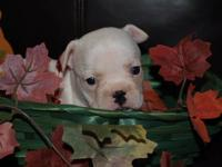 We have 6 french bulldog puppies that are available to