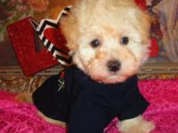 I have 5 male Maltipoo Puppies, they are very cute and