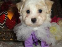 I have 4 adorable female and 1 male maltipoo puppies.