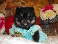 I have two Pomeranian, 1 male and 1 female. They both
