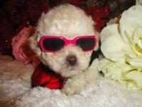 I have two adorable male maltipoo. They are super sweet