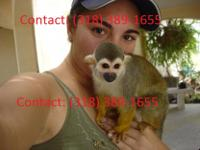 Animal Type: Monkey Very healthy male and female baby