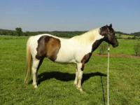 Price Reduced. Bandito is a beautiful stout paint with