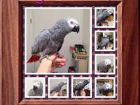 I have a very sweet Gray that I hand reared.. :-( I am
