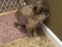 I have a sweet little lionhead bunny my dad is allergic