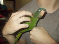 We have 2 baby blue crowned conures and 3 baby sun