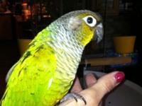 Looking for a brand-new bird mommy which will have fun