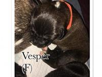 Vesper's story You can fill out an adoption application