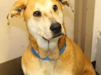 This young adult Hound mix would do best in a home with