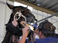Precision Dental Services provides all types of horse