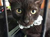 Viago's story Viago would be a purr-fect addition to