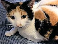 Vickie's story Vickie is a female calico cat, born on