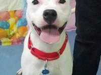 This 2 year old Pit mix is Vicky.  Vicky is an