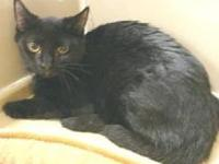 Victor's story Estimated birth date 6/1/09 black with