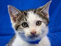My story Primary Color: Grey Tabby Secondary Color: