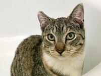 My story Victoria is a sweet young cat that had a rough