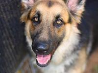 Victoria's story **Available for adoption to adopters
