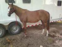 This mare is a great mare. She is loping a nice set of