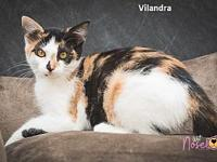 Vilandra's story You can fill out an adoption