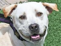 Vince's story Who doesn't love a yellow Lab! Vince is a