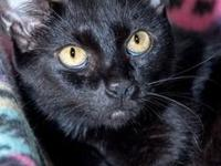 VINDA's story $97.50 FEE INCLUDES: neutering/spaying,