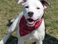 Vinny is a bouncy, outgoing guy looking for a home