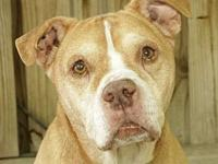 Vinny's story He is a super friendly loving dog. Our
