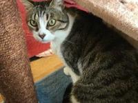 Vinny's story Meet Vinny! He is affectionate, bright,