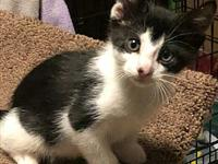 Vinny's story This sweet group of tuxedo wearing