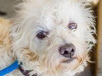 Vino needs local foster's story Please contact Fran