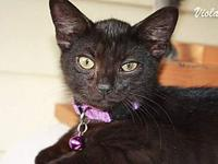 Viola's story Viola is a sweet little girl looking for