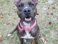 Violet's story Violet is a beautiful, 3 yr old brindle