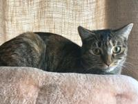 Violet is a sweet but shy Kitty. She is friendly and