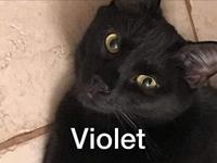 Violet's story Voilet is playful young cat (DOB July