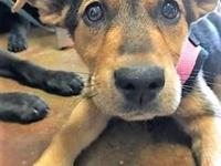 Violet's story My adoption fee is $150 which covers my;