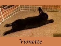 Vionette was dumped and rescued along with 6 other