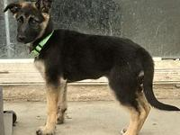 My story Vitani is about 4 months old. She is a typical